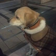 寒い夜散歩
