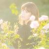 1225:リク撮Report*京成バラ園の画像