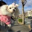 寒波の日のお散歩♪ …