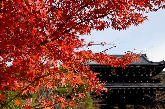 「知恩院 autumn」の画像検索結果