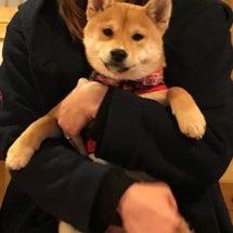 柴犬荘日記~コマちゃ…