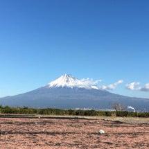 富士山と桜えび