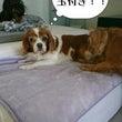 JOJO&ポヨ