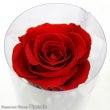 今日の誕生花【赤バラ…