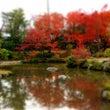 京都の紅葉 法金剛院…