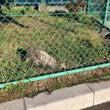 梶野町で狸の目撃情報…