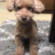 愛犬MLのバースデー