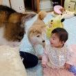 赤ちゃんと「なんでや…