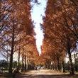 横浜対栃木戦の風景。