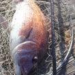 釣りは趣味娯楽道楽