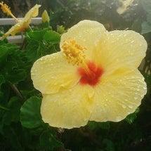 Aloha stat…
