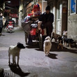 中国の犯罪組織、犬を…