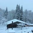 今朝も雪〜