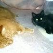 コタツは猫を仲良しに…