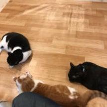 暇を持て余した猫達と…