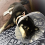 看板犬療養中。。。