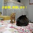 No.1627 再募…