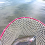 釣りに行きました。