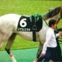 優しく責任感の強い馬…