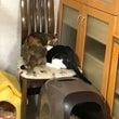 譲渡会・今日の猫達