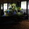 松の木イルミネーションの画像