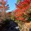 熱海 日本イチ遅い紅葉の熱海梅園
