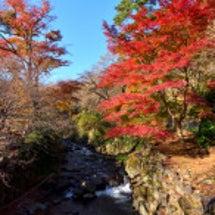 熱海 日本イチ遅い紅…