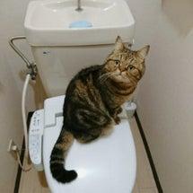 トイレにもゴジラ現る…