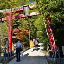 熱海 来宮神社の大楠