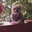 Santa Dog …