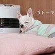 ストーブ犬の季節