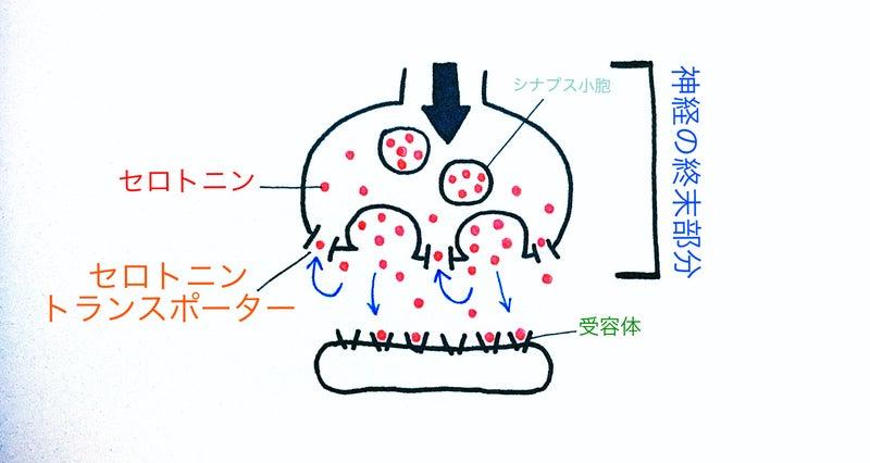 ポーター セロトニン トランス 脳科学者中野信子が語る! 第2回