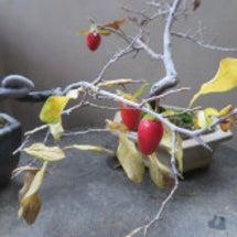 盆栽:簡単な作業