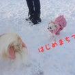 初ドッグラン*雪うさ…