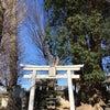 * 御神木が東西南北に枝を伸ばしてるの画像