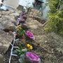 お花植えました