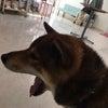 トリコロ'sチャロくん!の画像
