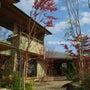 雑木の庭作り