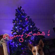 今年もクリスマスを。…