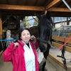 再・第41回 林流乗馬教室開催!の画像