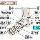 慢性的な肩こり・腰痛、その原因は「足」にあるかもしれませんの記事より