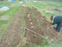 12月20ジャガ収穫 (1)
