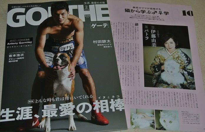 ゲーテ2018年2月号犬猫特集 伊藤由美ママ&パトラ
