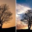 【韓国旅行】ただの木…