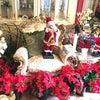 クリスマスの余韻の画像