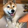 日本カウンセリングサービス社長と対談しましたの画像