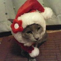 ムーの日&クリスマス…