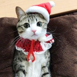 377. メリークリスマス