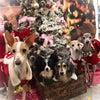 Merry Christmas〜の画像