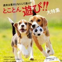 『愛犬の友1月号☆付…